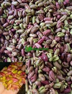 manfaat tanaman cengkeh